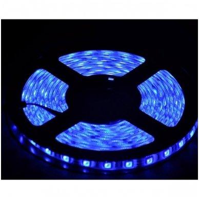 LED juosta mėlyna 12V 4.8W/m LED3528 SMD hermetiška 2